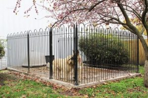 WHAT TYPE OF IRON FENCE IS BEST FOR MY DOG?