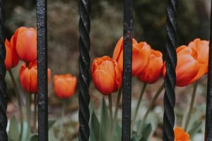 Permissions to Place Iron Fence Northbrook