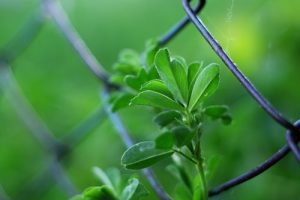 How To Check Your Fences For Signs Of Damage